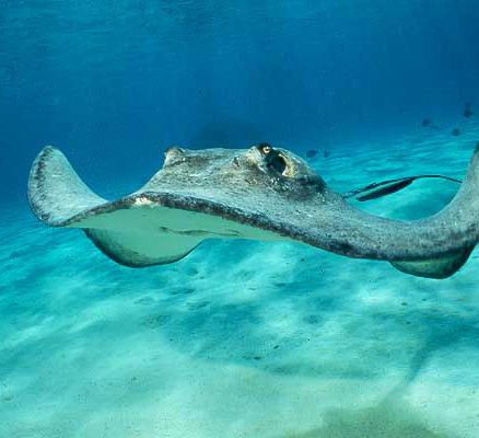 A stingray does not automatically equate with warm and fuzzy feelings. But the people of Struisbaai feel something remarkably similar for the group of stingrays that gather in their harbour. And th...