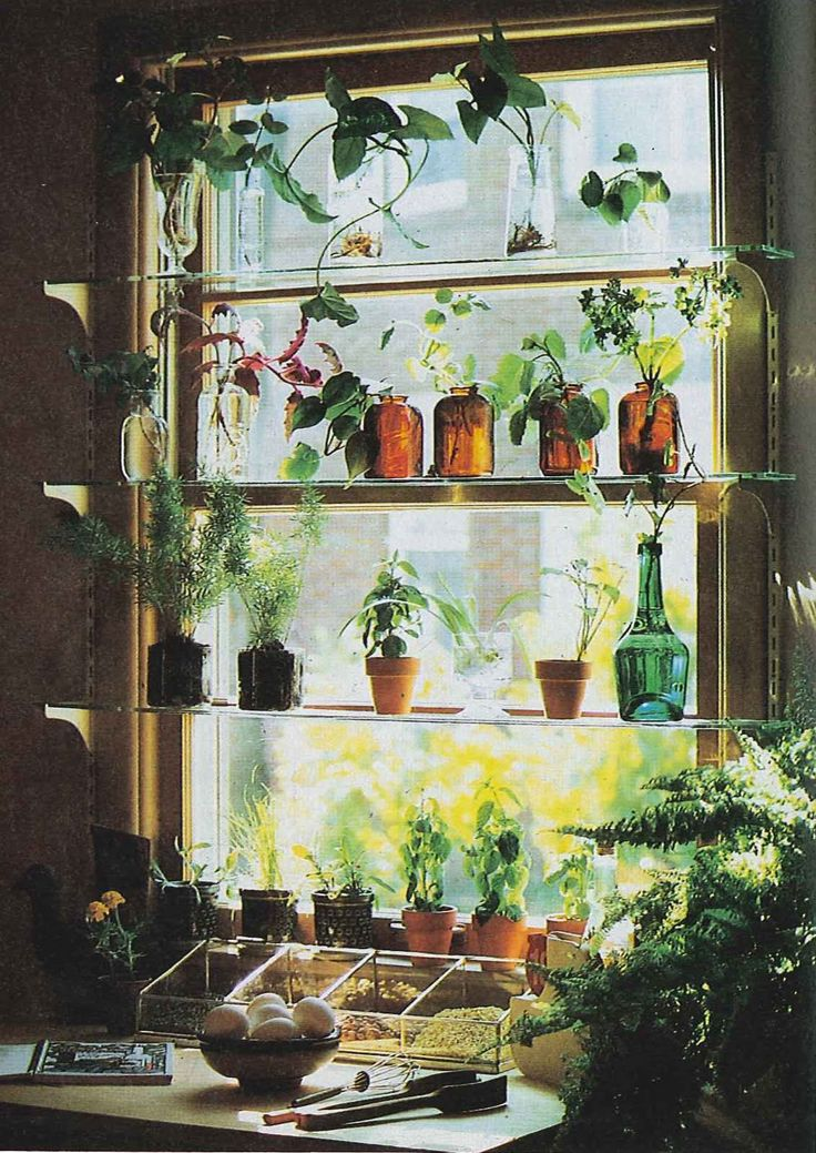 Spilling off the shelves! I love the use of coloured glass bottles - so pretty in a sunny window.
