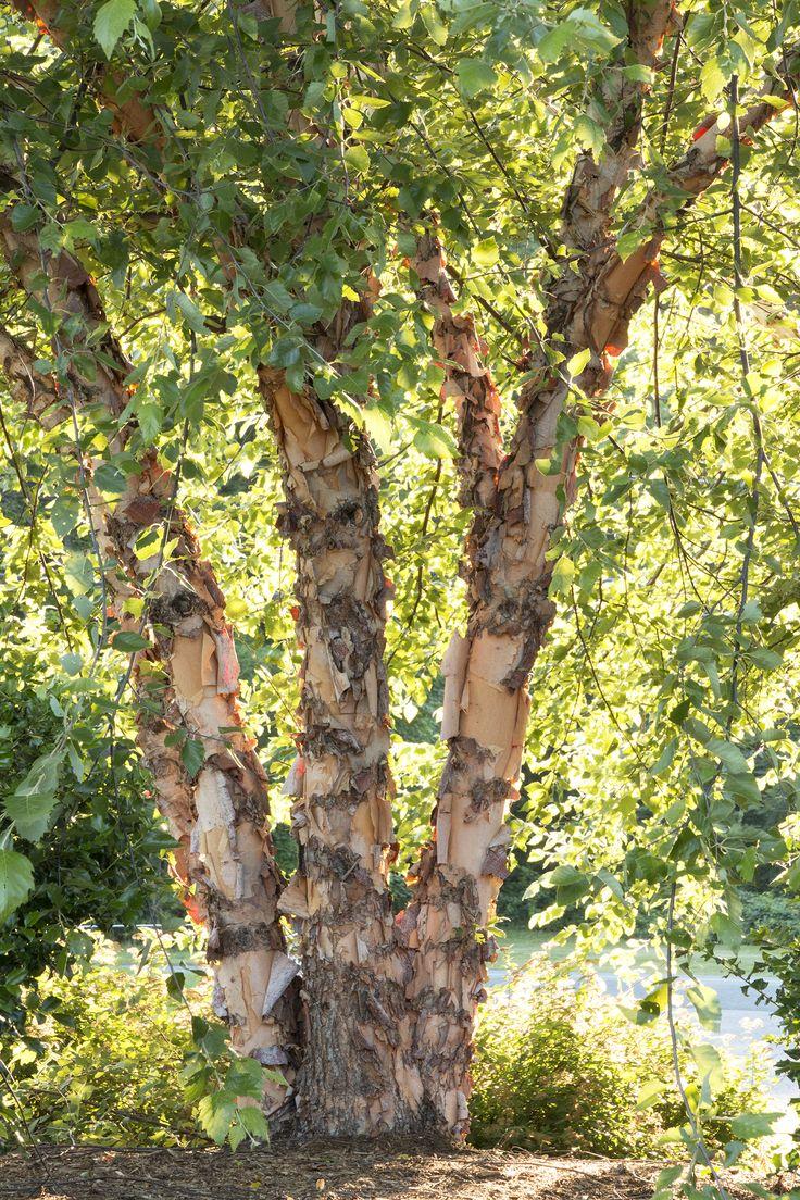 92 Best Wilmington Trees Landscape Images On Pinterest