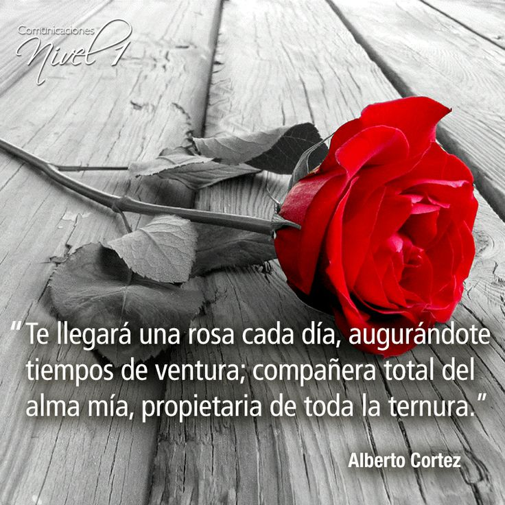 17 Best images about Rosas on Pinterest | Yellow roses