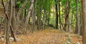 Hike the Bruce Trail