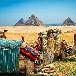 #mulpix @life_in_egypt -  Good morning dear followers from Cairo, Egypt. Have a fruitful day! . . .  #egypt  #egyptinmyheart  #loveegypt  #cairo  #city  #oldisgold  #pyramids  #ancient  #history  #oldisgold  #youhavetocomehere  #youwillloveit  #traveling  #holiday  #египет  #город  #каир  #путешествие  #волшебнаястрана  #приезжайтевгости  #вамтутпонравится  #Regrann