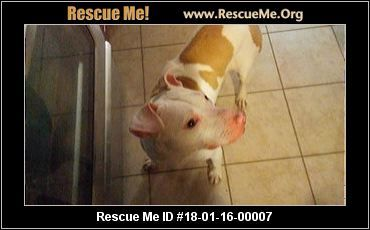 ― Mississippi Bullmastiff Rescue ― ADOPTIONS ―RescueMe.Org