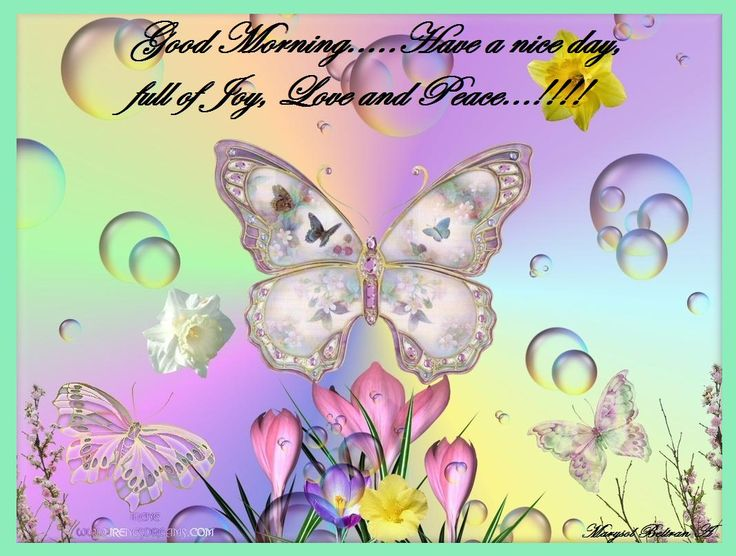 butterfly blessings | Good Morning…..Have a nice day, full ...