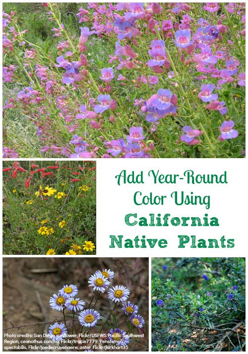 how to add year round color to my garden using california native plants