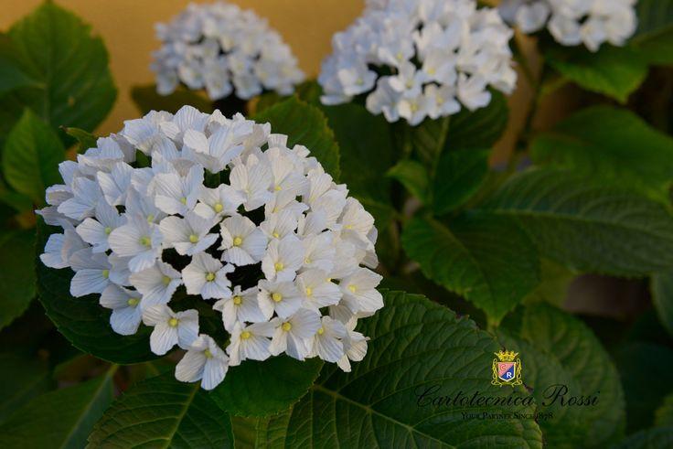 17 migliori idee su tipi di fiori su pinterest bouquet for Tipi di fiori