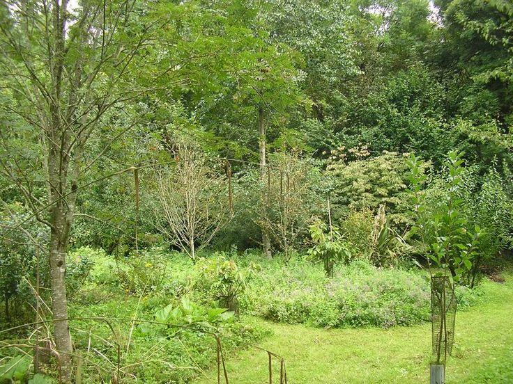 Créer une forêt comestible en permaculture