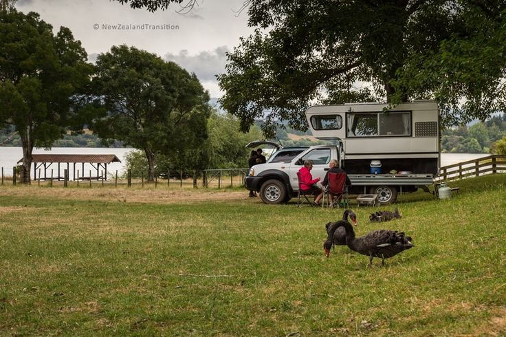 black swans and holiday campers at Lake Tutira campsite