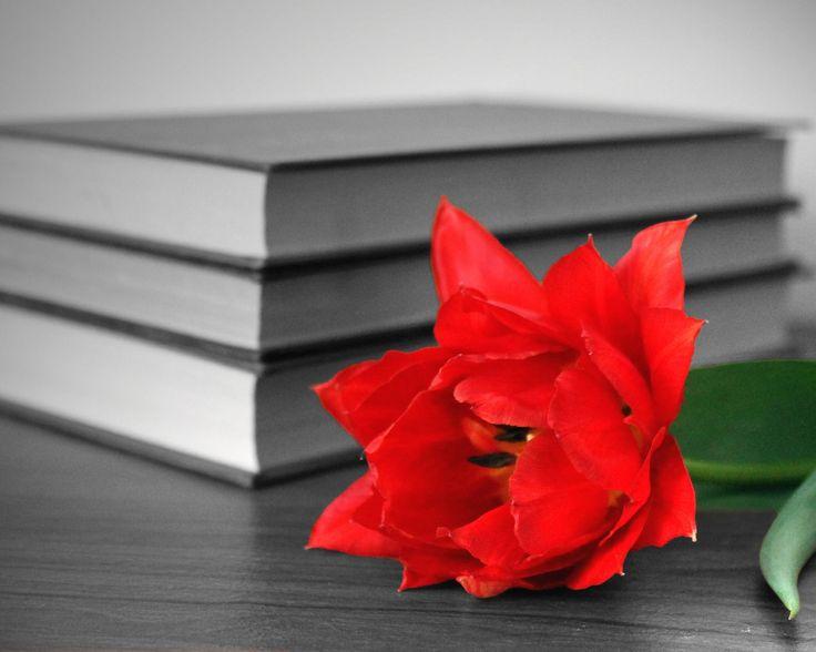 Скачать обои книги, цветок, красный, стол, раздел разное в разрешении 1280x1024
