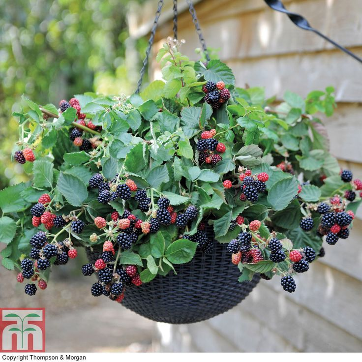 33 Best Images About Wood Planter Tree Box On Pinterest: Best 25+ Strawberry Planters Ideas On Pinterest