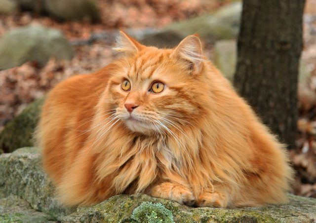 21 Of The Best Orange Tabby Cats You Will See Today Orange Tabby