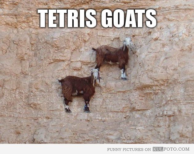 Tetris goats - Funny goats standing on a steep cliff looking like pieces from Tetris video game.