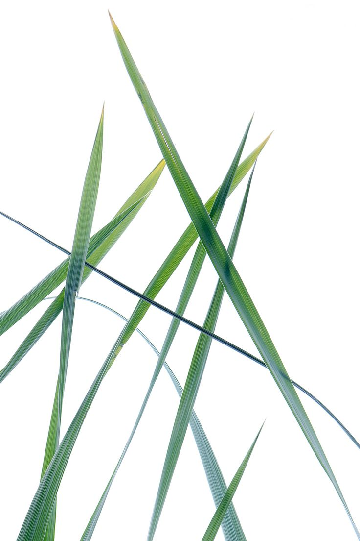 leaves of grass (mary jo hoffman)