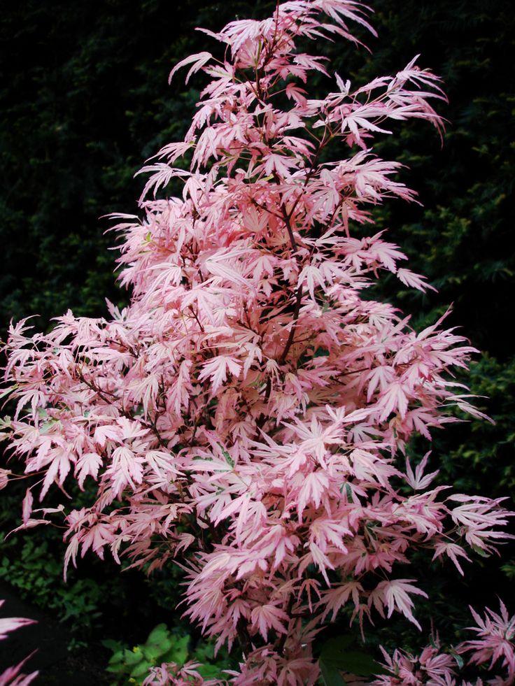 Les 25 meilleures id es de la cat gorie plantes vivaces for Entretien plantes vivaces