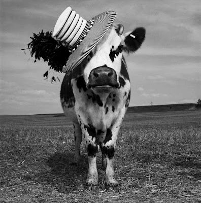 """""""Oh la vache!"""" by Jean-Baptiste Mondino fun series of 21 b photos by fashion photographer of a Holstein cow named Hermione donning hats designed by a UK milliner."""