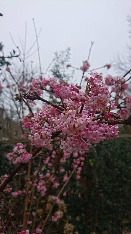 Als je van die mooie roze bomen ziet vol bloesem , daar kan ik echt van genieten. #lentegevoel