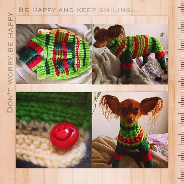 Made from the rest of yarns. #readyforfall #dogsclothes #knittingfordogs #irishanochizuru #russiantoyterrier #russkiytoy #russisktoy #russisktoyterrier