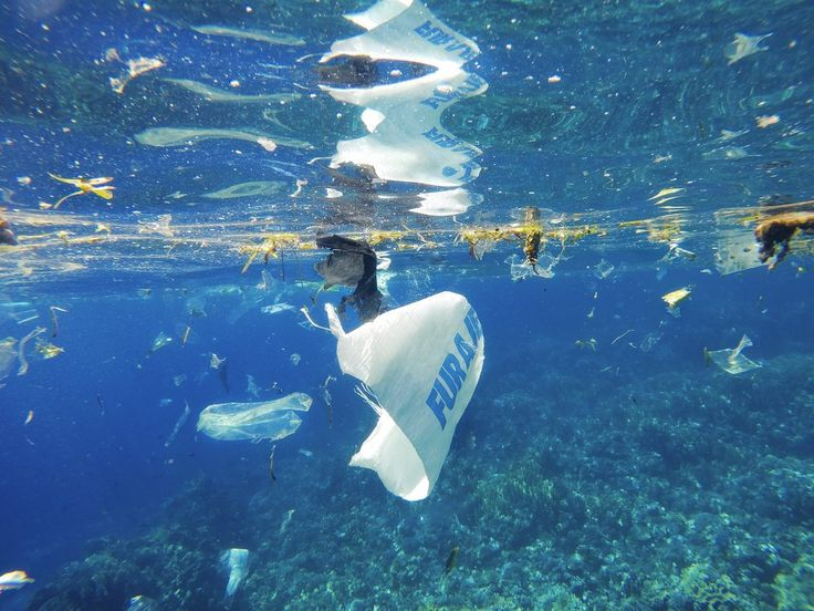 Over 200 Nations Vow to End Plastic Ocean Pollution