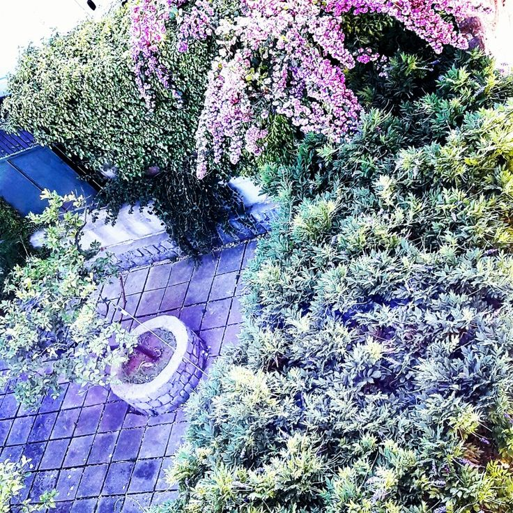 Italian secret garden