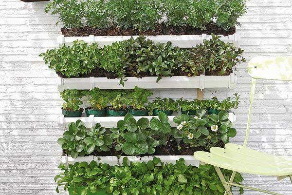 Etageres verticales pour cultiver des fraises