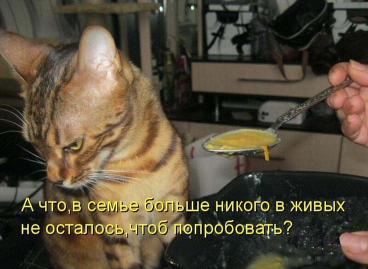 Картинки про кошек с прикольными надписями, красивых ногтей шеллак