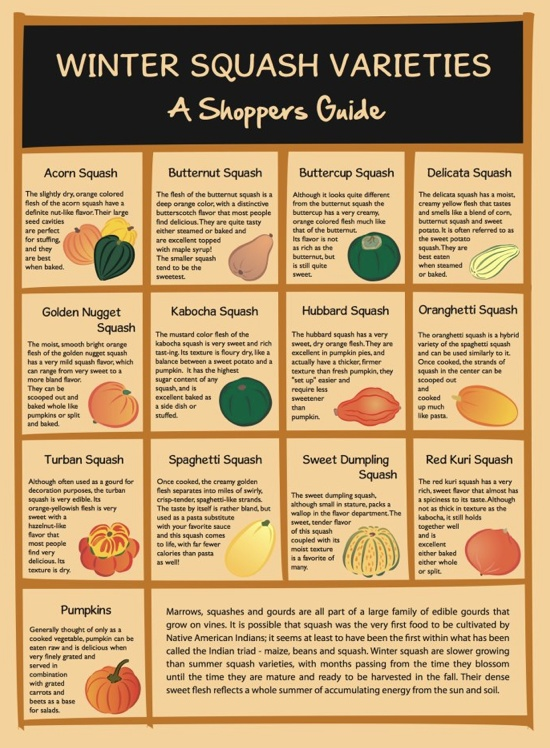#Winter #squash varieties: A #shoppers' #guide.