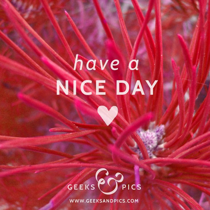 Have a nice day! http://www.geeksandpics.com/