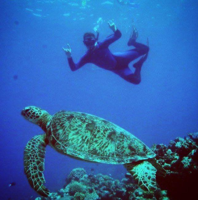 Snorkling och dykning på Stora barriärrevet innebär närkontakt med ett av havens häftigaste djur - sköldpaddan.  #ettannatliv #travel #turtle #greatbarrierreef #scubadiving #snorkeling #cairns #backpacking #resa #resor #australien #australia #storabarriärrevet #picoftheday #cute by _ettannatliv http://ift.tt/1UokkV2