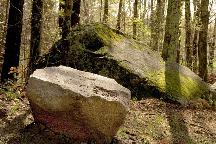 Image Result For Rocks And Boulders Forest Trees To