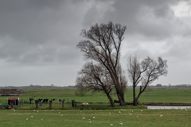 In de Mijse polder