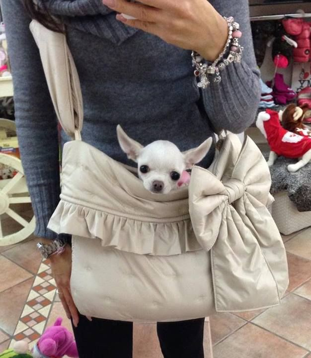 I have another bag for evenings. ~Fife' Le Chihuahua (626×720)