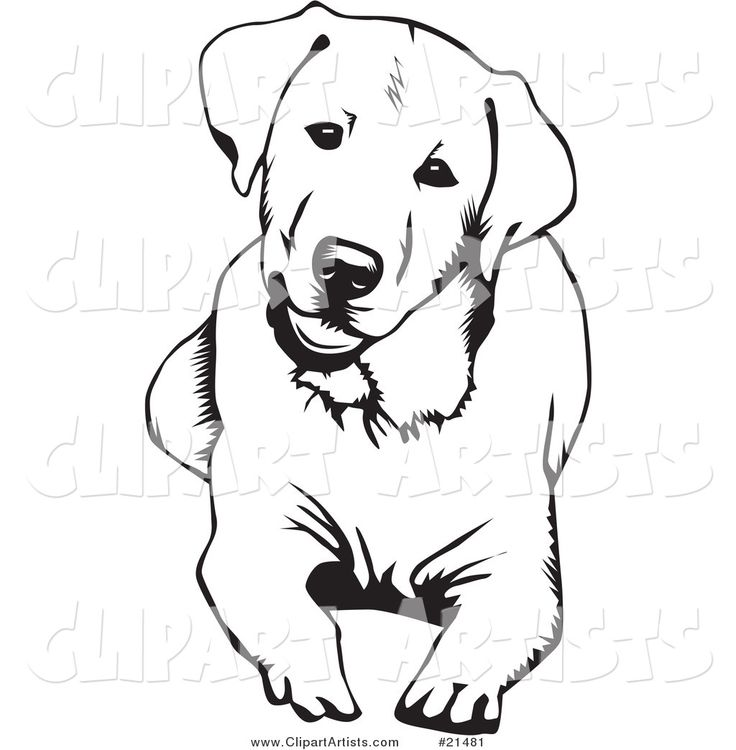 labrador coloring pages search tattoos