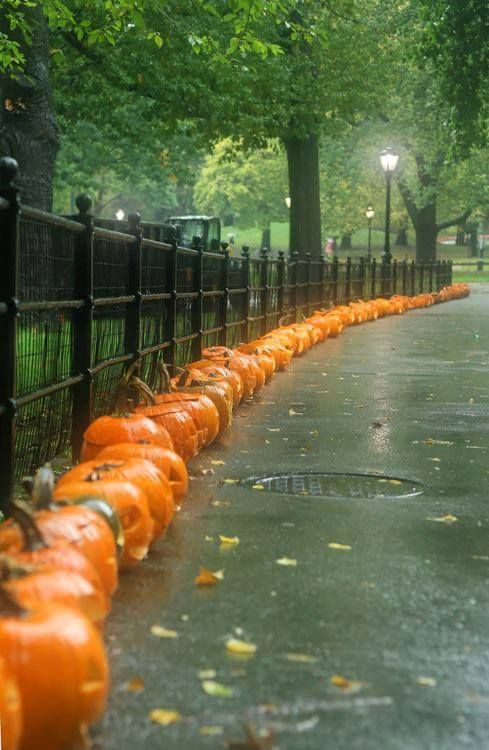 The day after Halloween. | I always feel a bit of sadness for the jack-o-lanterns the day after.
