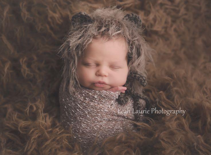 newborn baby bear