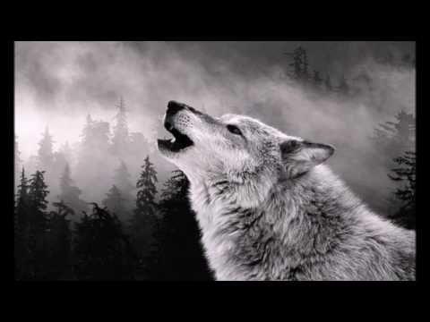 nature sounds howling wolf, звуки природы вой волка, 天籟嚎叫的狼, sonidos de ...