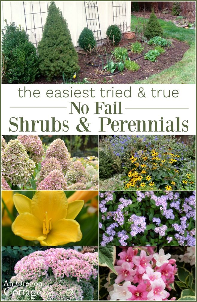Tried And True Easy Care Shrubs Perennials Low Maintenance