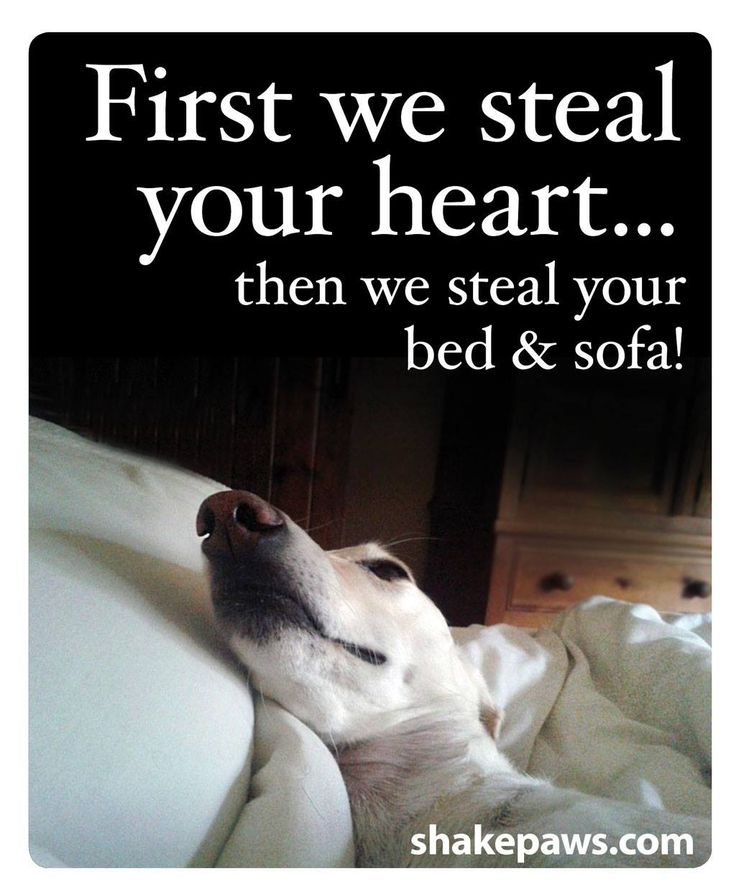 Pet quotes poems and sayings a collection of animals for Sofa quotes