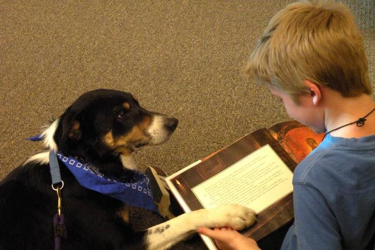 Therapy Dog Training San Jose