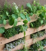pallet garden - more layers and raised garden beds