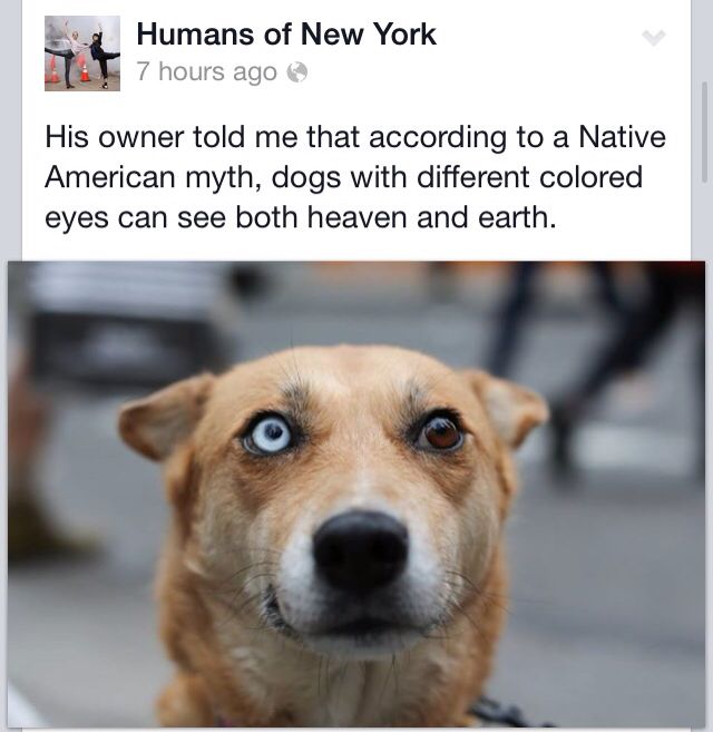 Humans Of New York page