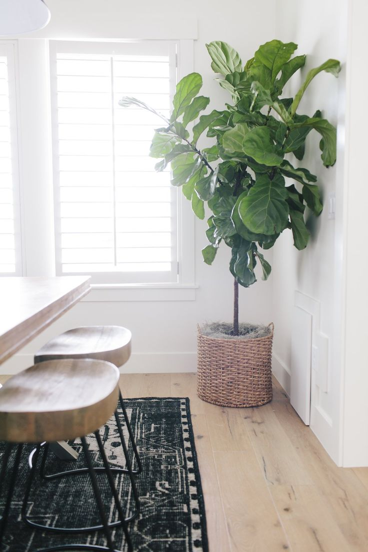 Tips for Decorating with Real and Faux Plants - House of Jade Interiors Blog
