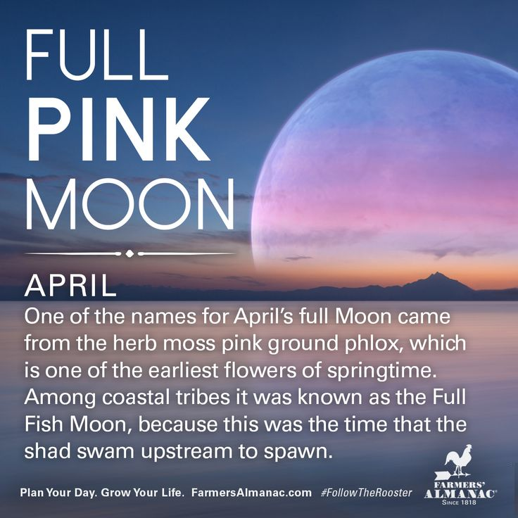 April's full Moon, like other full Moons, is rich in folklore and therefore was given many names. Watch our short video to learn the origin behind this full Moon's names: https://www.farmersalmanac.com/april-full-pink-moon-17237 #fullmoon #folklore #legends #NativeAmerican #astronomy #stargazing
