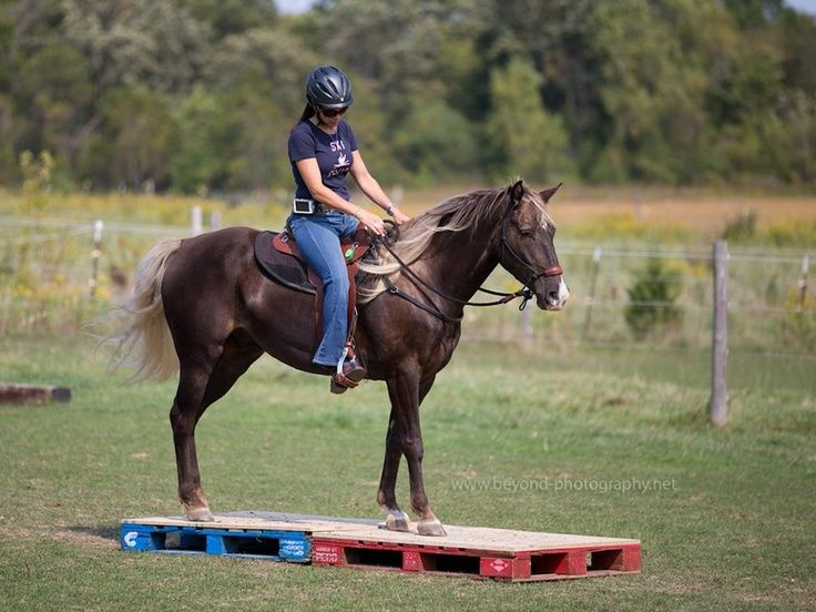 78 Best images about Horse Obstacle Course on Pinterest ...