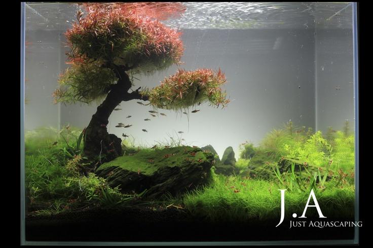 Aquarien - Aquarium - Wasserpflanzen - Flowgrow