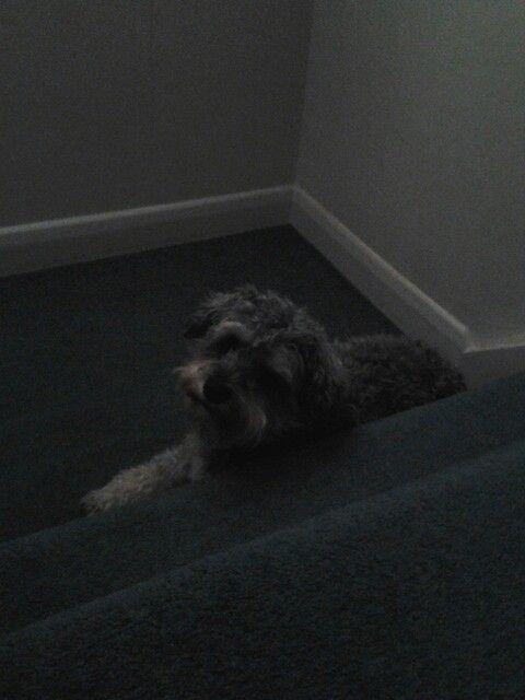 Ma boy sparky chillin' on da stairs!