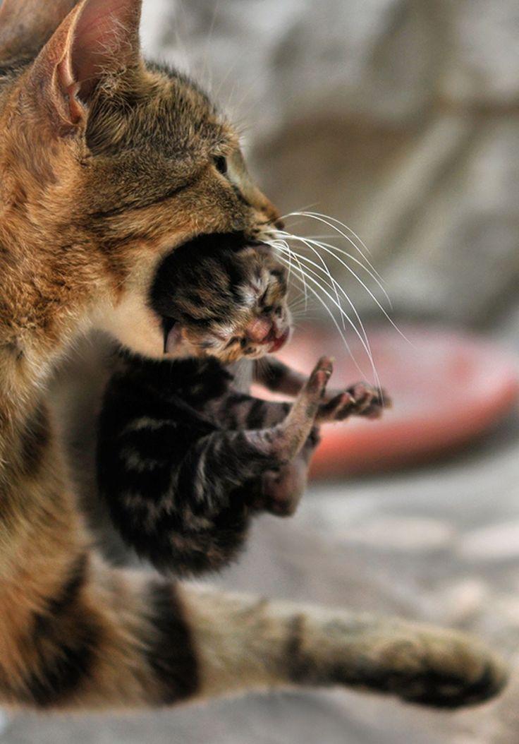 Venez choisir votre chat ou votre chaton à ADOPTER à Bordeaux, à l'Ecole du Chat…
