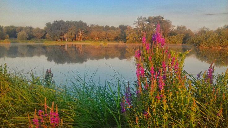 Lakephoto in sunset  #lakes #flowers #sunset #lakephotos #photos #photography