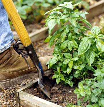 Bring Your Herb Garden Indoors Dont let winter curtail your outside activities. Your garden can grow indoors with our guidance.