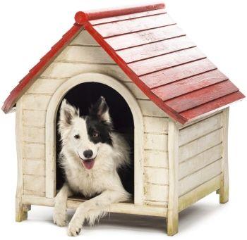 cucce per cani