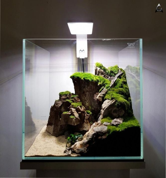 Beautiful fish tank ideas for Relaxing home in 2020 ...